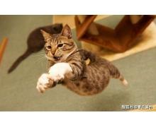 有俗语说猫有九条命这是真的吗 小鸡宝宝今日答