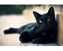 蚂蚁庄园7月22日答案 有俗语说猫有九条命这是真
